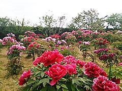 Dsc_0456_2